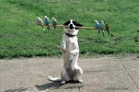 Η Περιστέρα του Σκύλου...