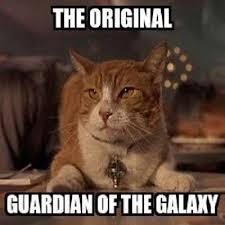 Cute Cat meme The original guardian of the galaxy. via Relatably.com