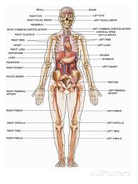anatomy human body   page  of   human anatomy for muscle    human bone structure urdu anatomical human body human anatomy diagram