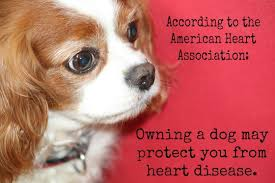 Οι σκύλοι σώζουν ζωές...