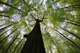 """Vaizdo rezultatas pagal užklausą """"EUROPE young pine forest"""""""