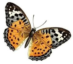 البوم اروع الفراشات images?q=tbn:ANd9GcR