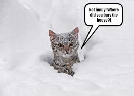 Image result for animal funnies