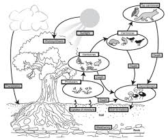 sisgeographywiki    climate  biomes and ecosystemsecosystem diagram png