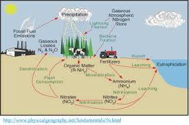 earth    s natural cycles  rock  carbon  water  nitrogen    soscsource http   orion chemi muni cz kucera new folder  nitrogen cycle jpg