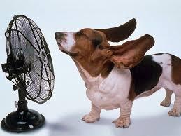 扇風機などを使って空気を流してあげたり、換気をよくしてあげることでさらに快適