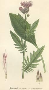Serratula - Wikipedia