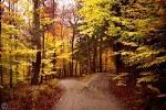 Robert Frost, The Road Not Taken