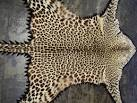 Leopard Print Rug eBay