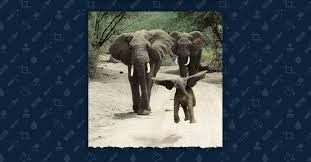 FACT CHECK: Is This a Jumping Baby <b>Elephant</b>?
