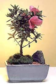 <b>Flowering Bonsai</b> - Facts, Caring & Gardening Tips, Popular Trees