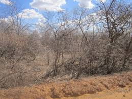 no more mass deaths from drought in northeast inter press manoel pereira barros shows the beehives on his small farm now useless because the bees have left due to the drought honey production one of the