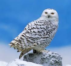 Птицы зимой (53 фото) картинки видео