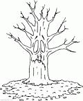 Осень дерево раскраска