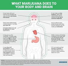 mental and physical effects of marijuana business insider bi graphics what happens to your body and mind when you re high