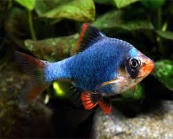 new--freshwater-fish-lounge---part-1