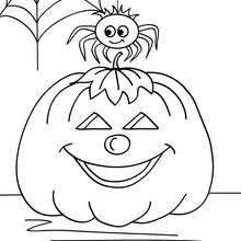 Small Picture SPIDER coloring pages 14 printables to color online for Halloween
