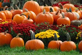 Image result for fall picture pumpkin