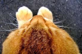 <b>Корм для кошек Шеба</b> (Sheba) - отзывы и советы ветеринаров