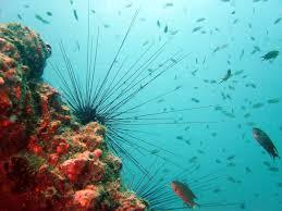 أكبر تجميع لأجمل صور من اعماق البحار (سبحان الله الخالق العظيم) Images?q=tbn:ANd9GcRAYai3HlJbYYBR1T88Cif9jde1zekoXlU_yefdZApD88LpSdJh