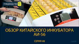 Птицеводство ТВ #8: Обзор китайского <b>инкубатора</b> для яиц АИ-56