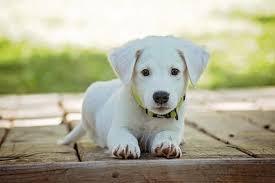 6,000+ Free <b>Puppy</b> & <b>Dog</b> Images - Pixabay