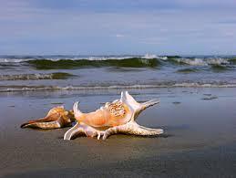 Resultado de imagem para imagens de praias tropicais