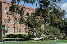 Image result for tree in the quad