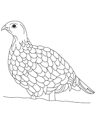 Small Picture Ruffed grouse coloring page Download Free Ruffed grouse coloring