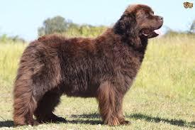 Ποιοι σκύλοι είναι επιρρεπείς στην αρθρίτιδα;