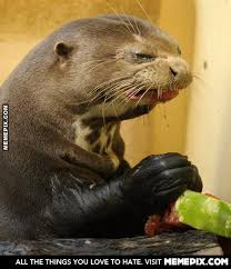 Seal is disgusted - MemePix via Relatably.com