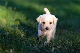 30,000+ Free <b>Cute Dog</b> Images & Pictures In HD - Pixabay