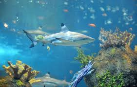 Sharks at the Malta National Aquarium