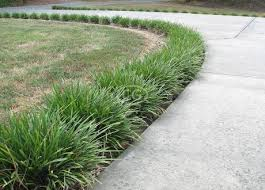 Image result for monkey grass
