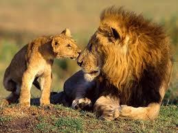 image de le lion Images?q=tbn:ANd9GcRC85TnHyyCxbfIUWRpKcna7GmgXcdblcD3219Gq_cs7zcELDSh