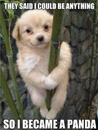 Panda Puppy Meme 11159 600x791 - uMad.com via Relatably.com