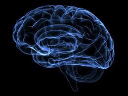 「歩行と脳活動」の画像検索結果