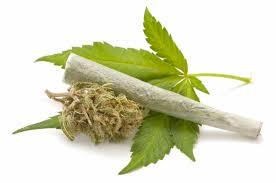 Resultado de imagen para marihuana