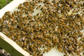 the secret lives of honeybees how honey gets made serious eats 20140617 honey bees overhead 2 jpg