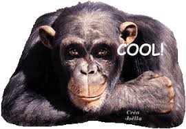 Résultats de recherche d'images pour «gif animé cool»