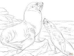 Small Picture Steller Sea Lions coloring page Free Printable Coloring Pages