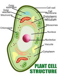 essay on plant cell words