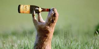 5 <b>Animals</b> That Get <b>Drunk</b> in the Wild | The Fact Site