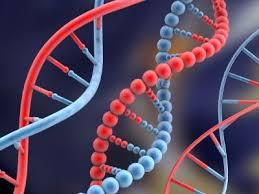 Resultado de imagem para epigenética imagens livres