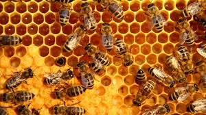 Image result for honeycomb