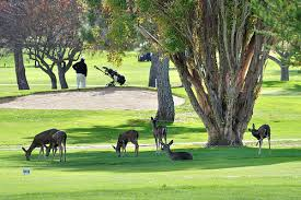 Image result for santa teresa golf course