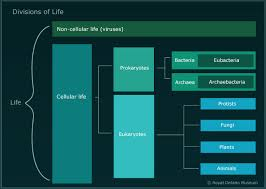 The Tree of <b>Life</b> - <b>Origin</b> of <b>Animals</b> and the Cambrian Explosion ...