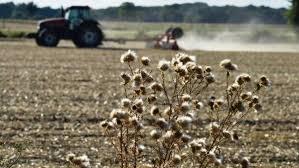 Les agriculteurs du Grand Est et de Bourgogne-Franche-Comté touchés par la sécheresse