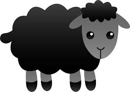 Image result for black sheep pictures