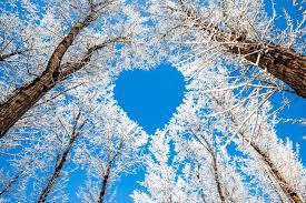 Rezultat iskanja slik za snow love